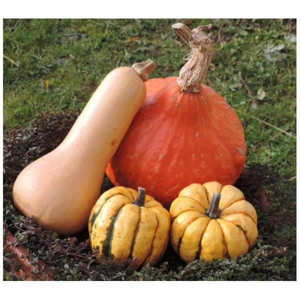 Courges (1 kg)
