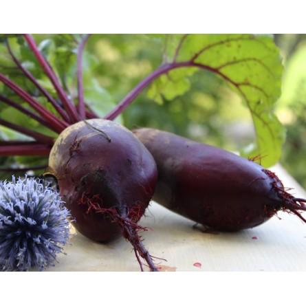 Fromage frais pur chèvre nature