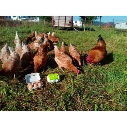 Pommes de terre de garde / Ditta 10 kg.